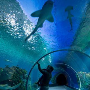Blue Plane aquarium