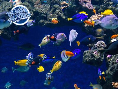Blue Planet Aquarium Exotic Fish