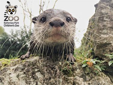 Battersea Park Zoo Otter