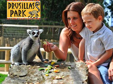 Drusillas Park Best Small Zoo