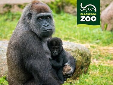 Blackpool Zoo Discount