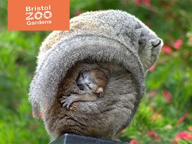 Bristol Zoo Voucher Code