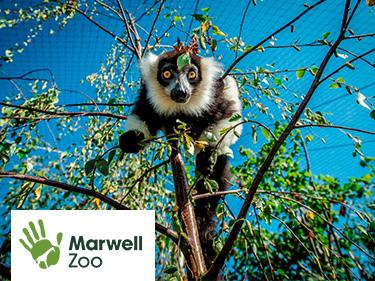 Marwell Zoo Vouchers