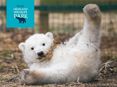 Highland Wildlife Park Baby Polar Bear