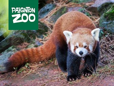 Paignton Zoo Red Panda Habitat