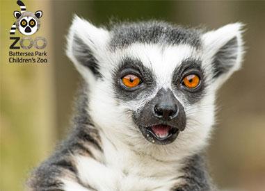 Battersea Park Zoo Lemur