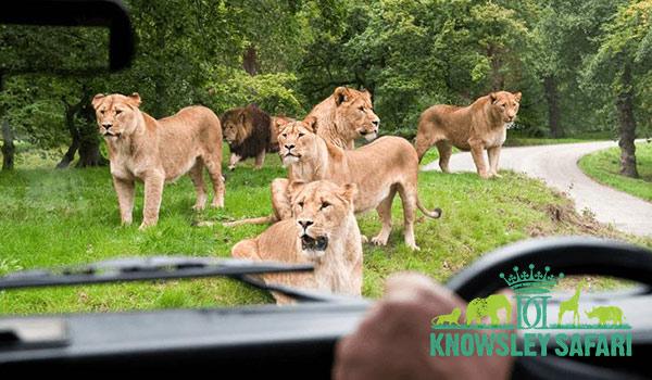 Knowsley Safari Park Family Adventure in Liverpool