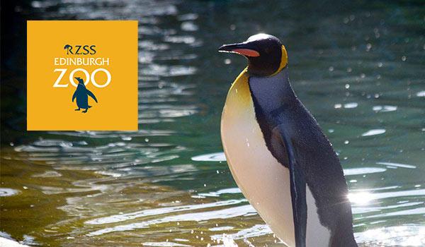 Edinburgh Zoo Penguins Summer