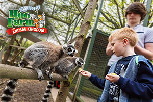 UK Farm Day Out with the Kids