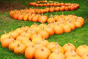 FREE pumpkins at Twinlakes theme park this Halloween