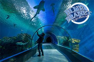 Blue Planet Aquarium Voucher