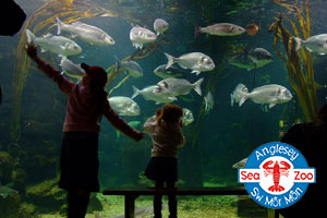 Anglesey Sea Zoo Voucher Code