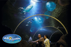 Seaquarium in Weston-Super-Mare with sting rays and shark displays