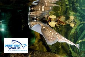 Sting Ray at Deep Sea World