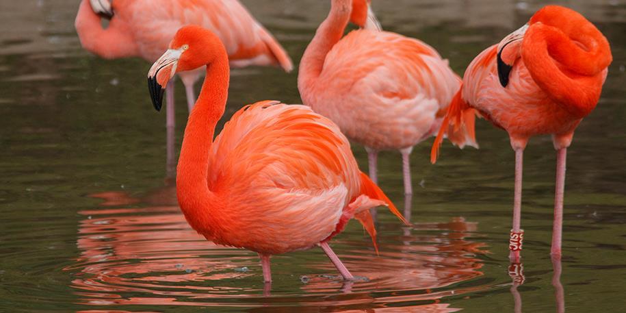 flamingo at blackpool zoo